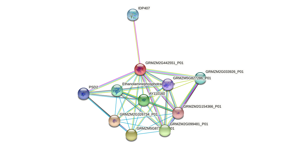 GRMZM2G442551_P01 protein (Zea mays) - STRING interaction network