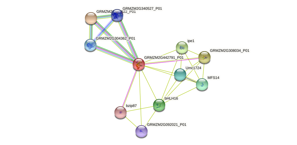 Zm.39671 protein (Zea mays) - STRING interaction network