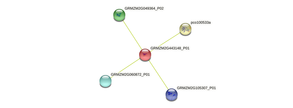 GRMZM2G443148_P01 protein (Zea mays) - STRING interaction network