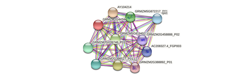 GRMZM2G443447_P01 protein (Zea mays) - STRING interaction network