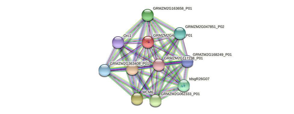 GRMZM2G443836_P01 protein (Zea mays) - STRING interaction network