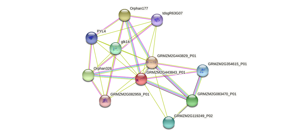 GRMZM2G443843_P01 protein (Zea mays) - STRING interaction network