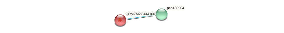 GRMZM2G444100_P01 protein (Zea mays) - STRING interaction network