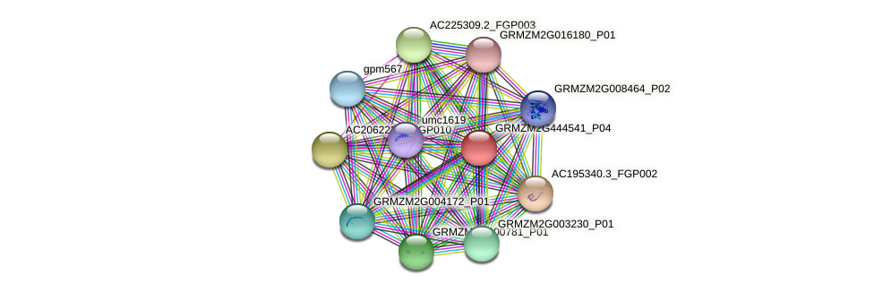 GRMZM2G444541_P04 protein (Zea mays) - STRING interaction network