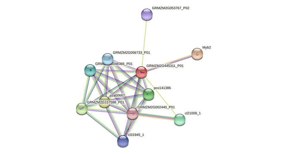 GRMZM2G445311_P01 protein (Zea mays) - STRING interaction network