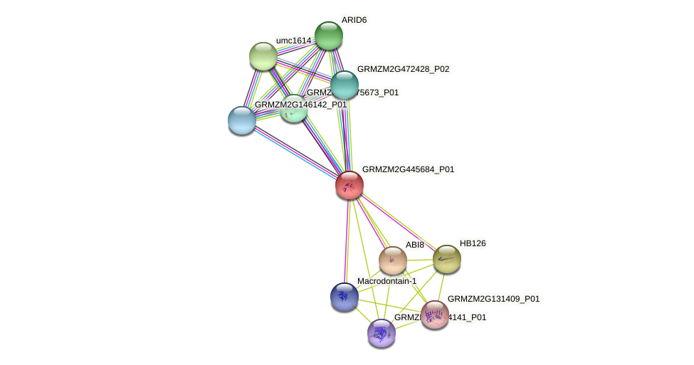 GRMZM2G445684_P01 protein (Zea mays) - STRING interaction network