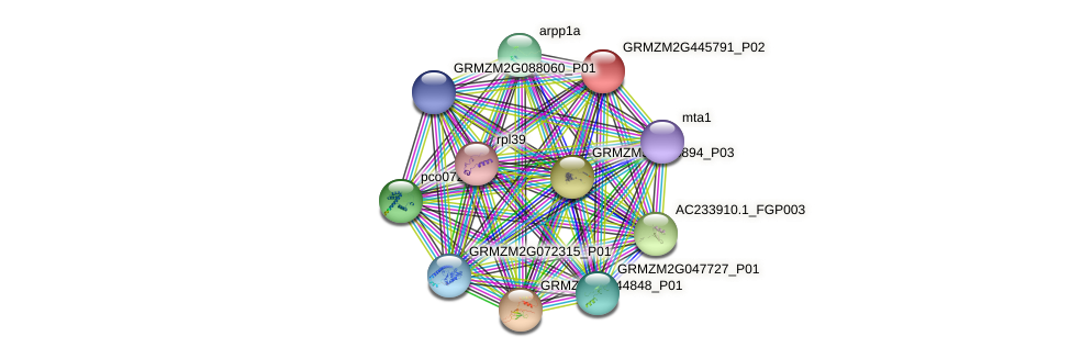 GRMZM2G445791_P02 protein (Zea mays) - STRING interaction network