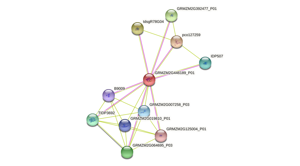 GRMZM2G446189_P01 protein (Zea mays) - STRING interaction network