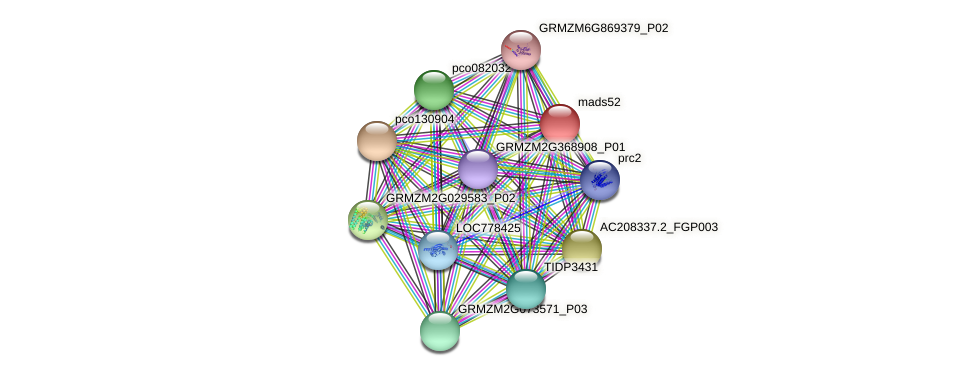 mads52 protein (Zea mays) - STRING interaction network