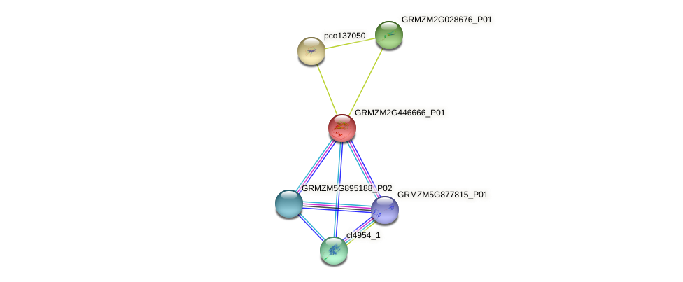 GRMZM2G446666_P01 protein (Zea mays) - STRING interaction network