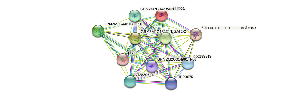 pco117551 protein (Zea mays) - STRING interaction network