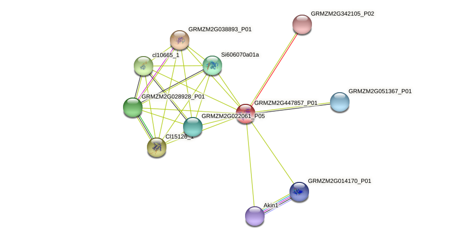 GRMZM2G447857_P01 protein (Zea mays) - STRING interaction network