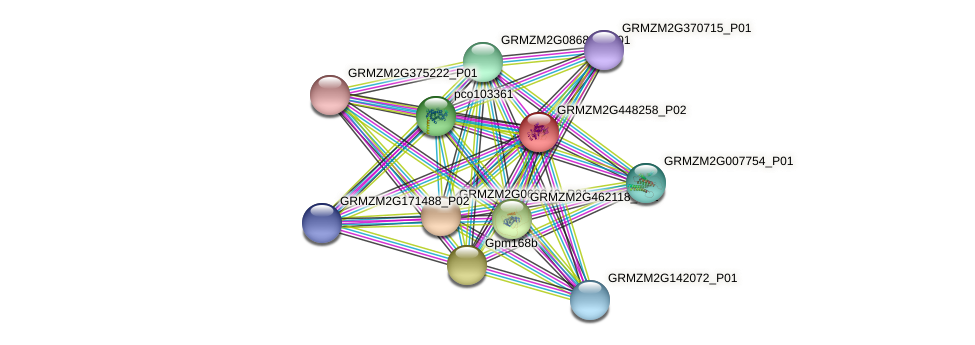 GRMZM2G448258_P02 protein (Zea mays) - STRING interaction network