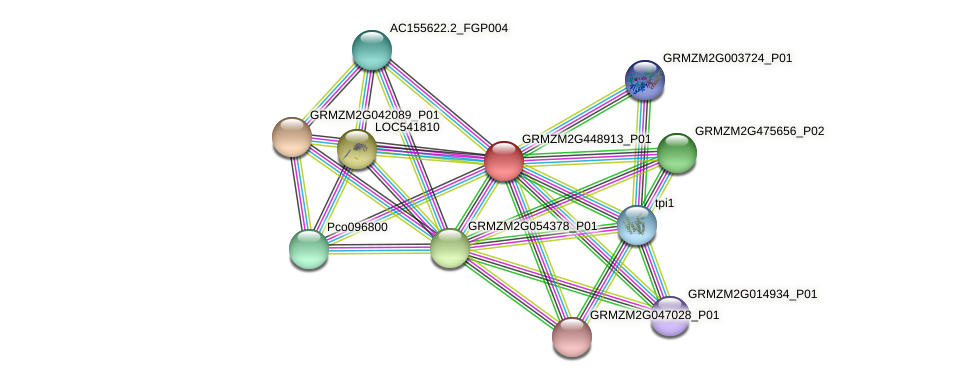 GRMZM2G448913_P01 protein (Zea mays) - STRING interaction network