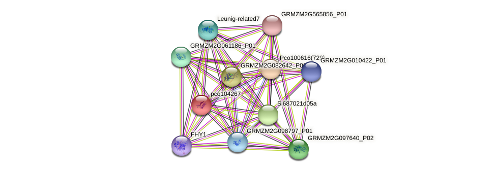 pco104267 protein (Zea mays) - STRING interaction network
