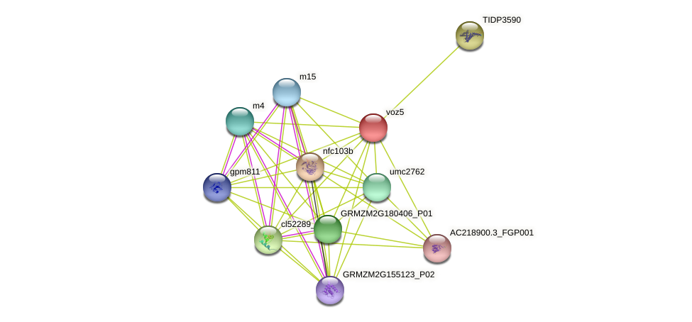 Zm.74278 protein (Zea mays) - STRING interaction network