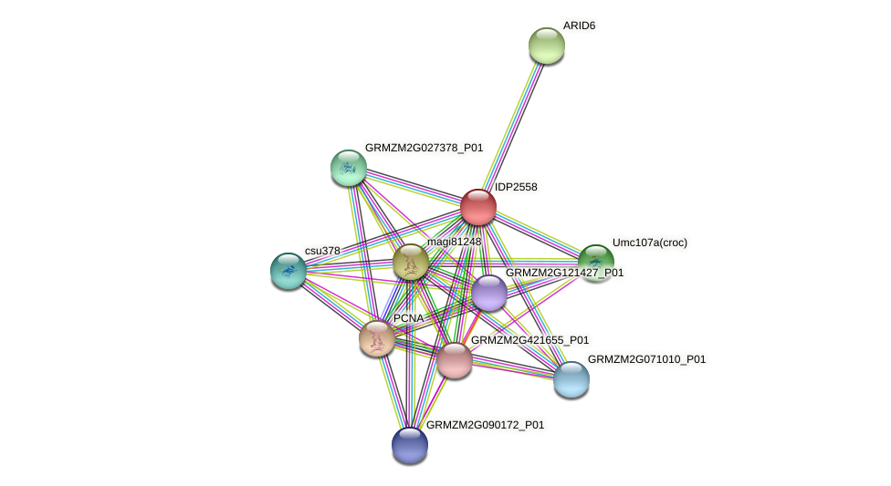 IDP2558 protein (Zea mays) - STRING interaction network