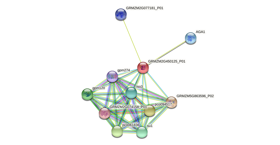 Zm.3883 protein (Zea mays) - STRING interaction network