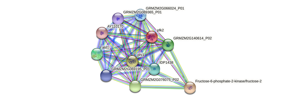 GRMZM2G450163_P01 protein (Zea mays) - STRING interaction network
