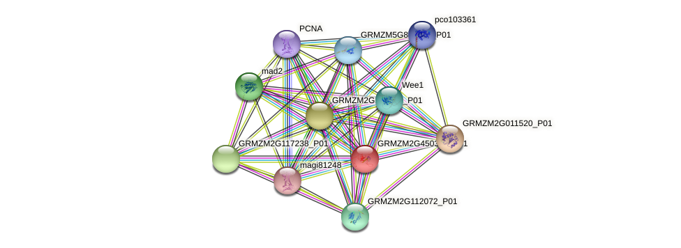 GRMZM2G450308_P01 protein (Zea mays) - STRING interaction network