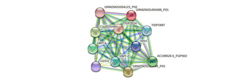 GRMZM2G450498_P01 protein (Zea mays) - STRING interaction network