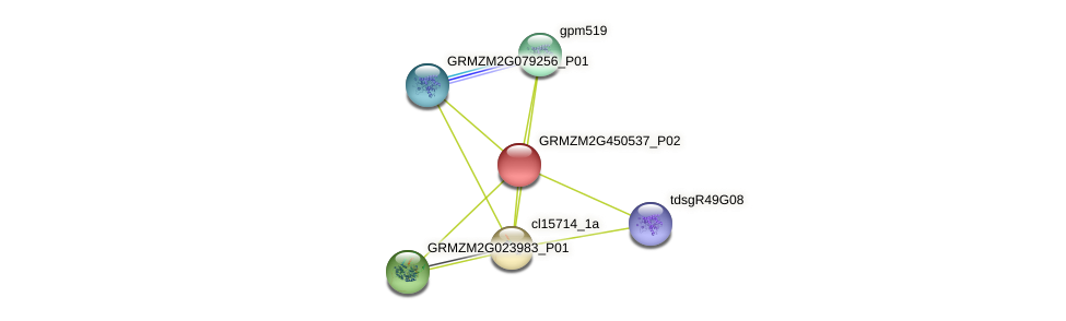 GRMZM2G450537_P02 protein (Zea mays) - STRING interaction network