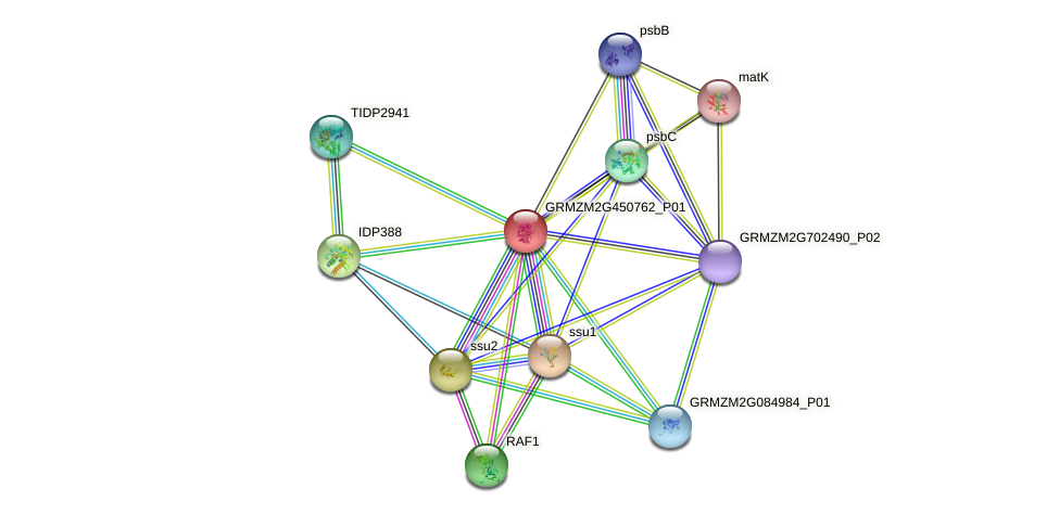 GRMZM2G450762_P01 protein (Zea mays) - STRING interaction network