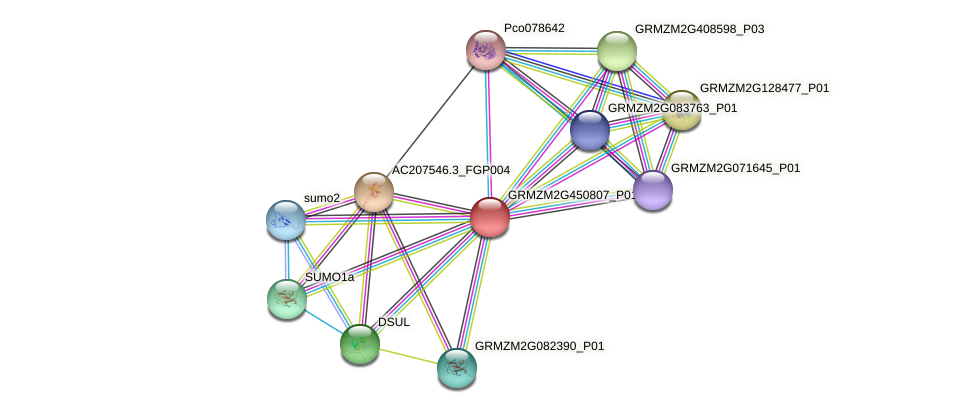 GRMZM2G450807_P01 protein (Zea mays) - STRING interaction network