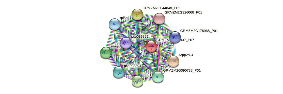 GRMZM2G450937_P07 protein (Zea mays) - STRING interaction network