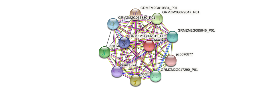 PSAH protein (Zea mays) - STRING interaction network