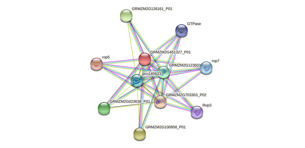 GRMZM2G451327_P01 protein (Zea mays) - STRING interaction network