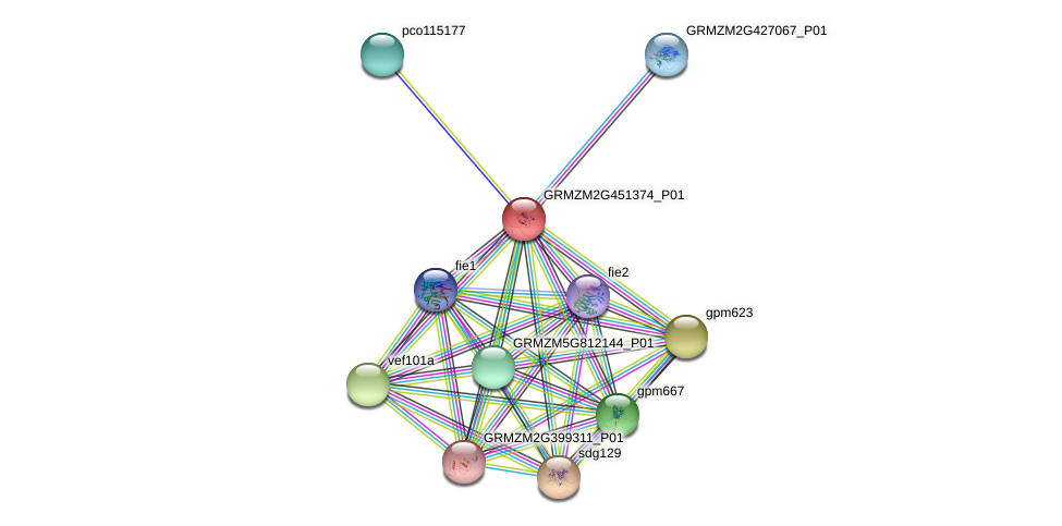 GRMZM2G451374_P01 protein (Zea mays) - STRING interaction network