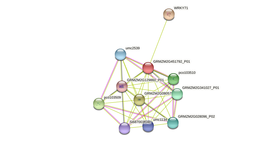 GRMZM2G451792_P01 protein (Zea mays) - STRING interaction network