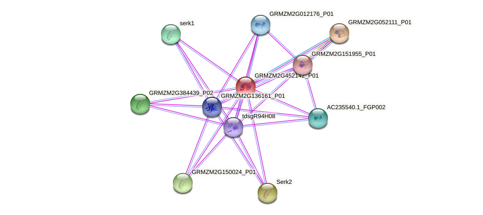 GRMZM2G452142_P01 protein (Zea mays) - STRING interaction network
