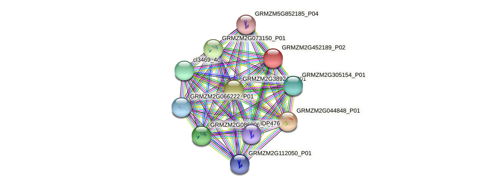 GRMZM2G452189_P02 protein (Zea mays) - STRING interaction network