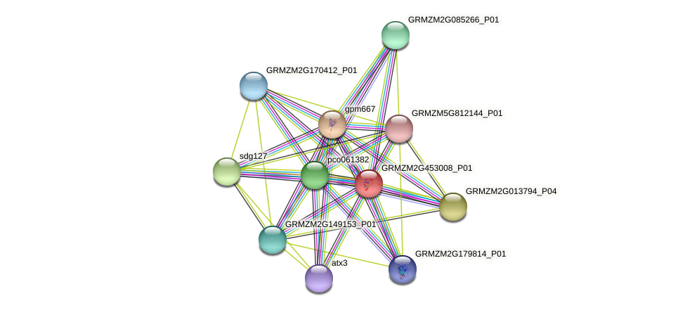 GRMZM2G453008_P01 protein (Zea mays) - STRING interaction network