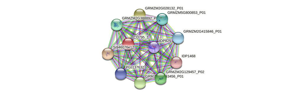 Zm.25471 protein (Zea mays) - STRING interaction network