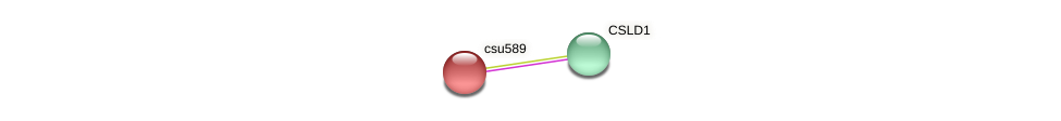 csu589 protein (Zea mays) - STRING interaction network