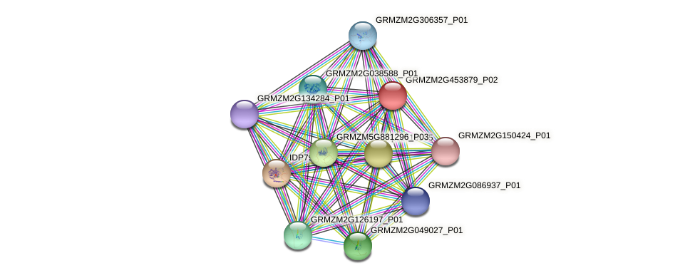 GRMZM2G453879_P02 protein (Zea mays) - STRING interaction network