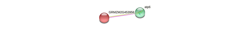 GRMZM2G453956_P01 protein (Zea mays) - STRING interaction network
