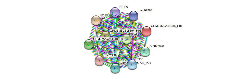 GRMZM2G454085_P01 protein (Zea mays) - STRING interaction network