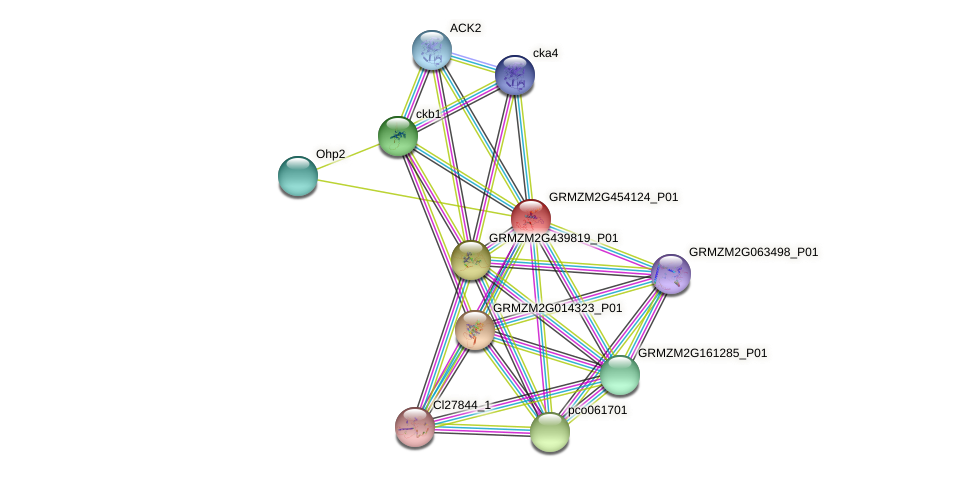 GRMZM2G454124_P01 protein (Zea mays) - STRING interaction network