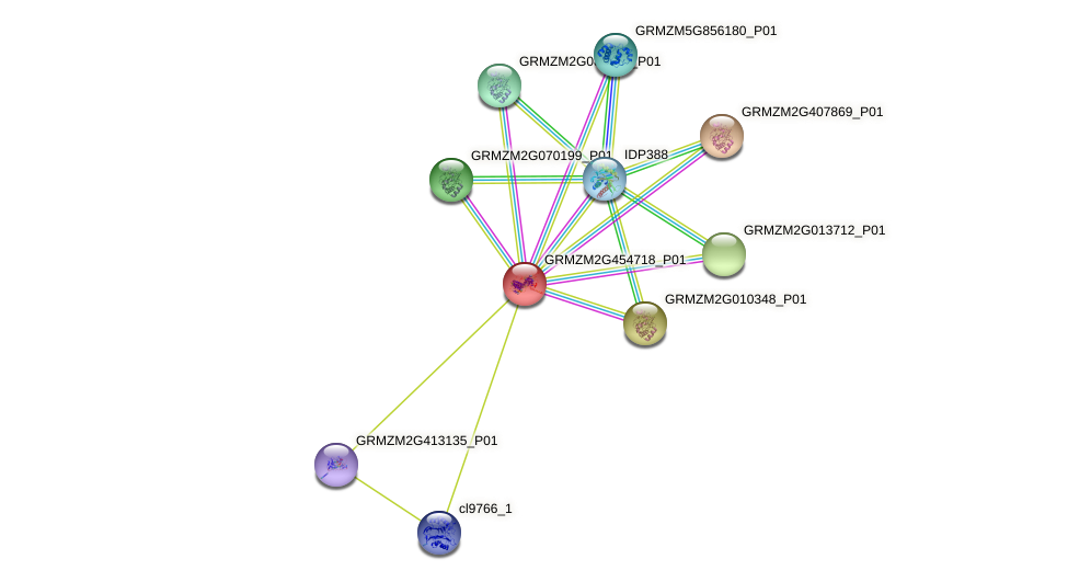 GRMZM2G454718_P01 protein (Zea mays) - STRING interaction network