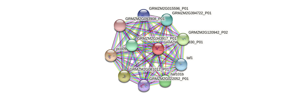 GRMZM2G454830_P01 protein (Zea mays) - STRING interaction network