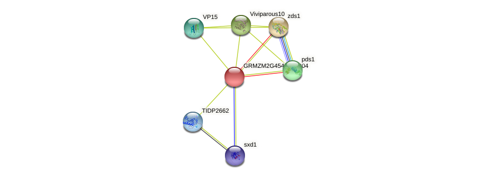 GRMZM2G454928_P04 protein (Zea mays) - STRING interaction network