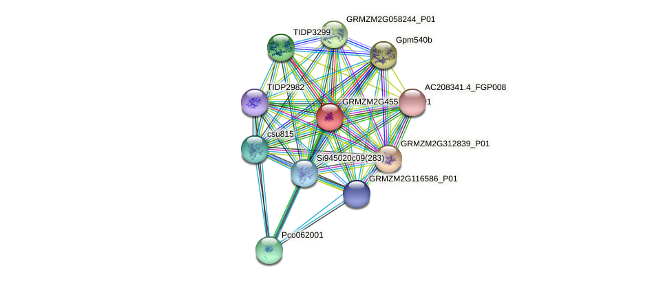 Zm.96004 protein (Zea mays) - STRING interaction network