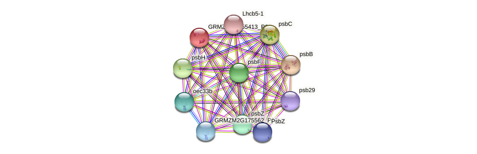 GRMZM2G455413_P01 protein (Zea mays) - STRING interaction network