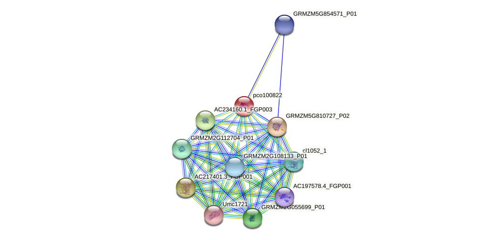 pco100822 protein (Zea mays) - STRING interaction network
