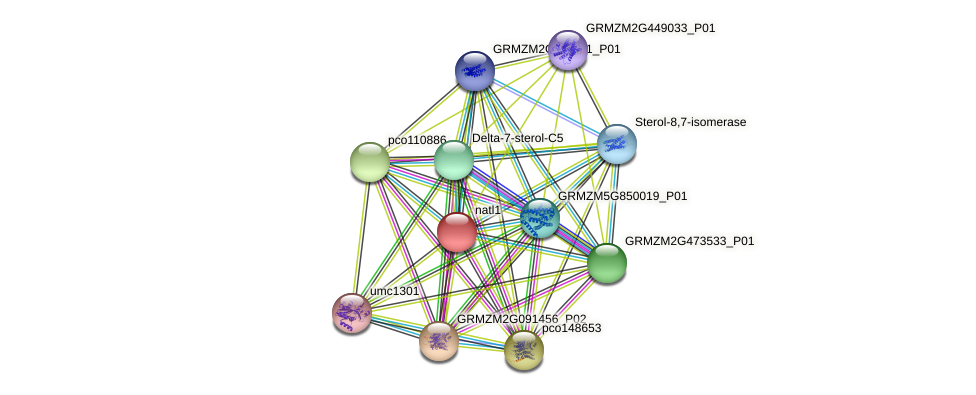 GRMZM2G455658_P01 protein (Zea mays) - STRING interaction network