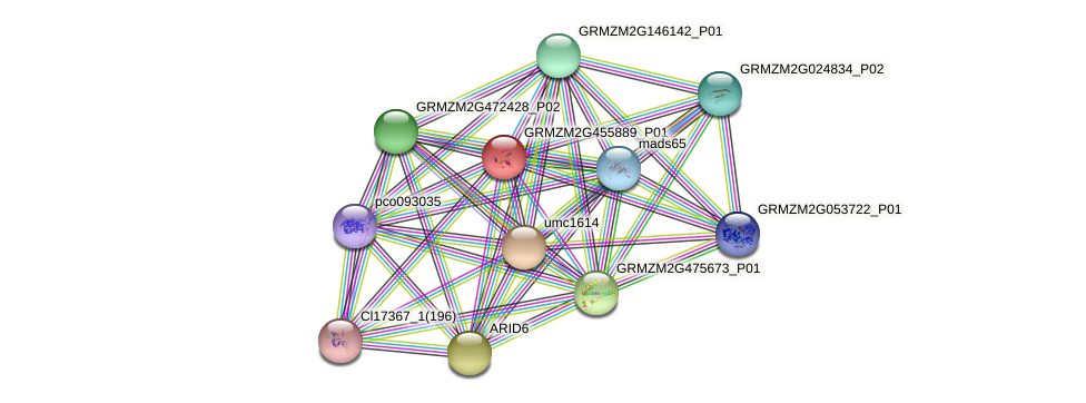 GRMZM2G455889_P01 protein (Zea mays) - STRING interaction network